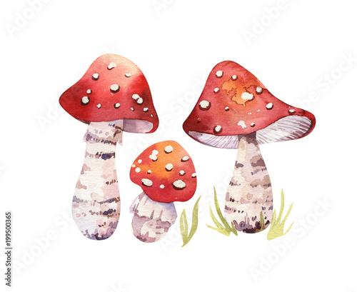 Watercolor bohemian forest mushrooms poster, woodland isolated amanita illustration, fly agaric, boletus, orange-cap boletus mushroom decoration Canvas Print