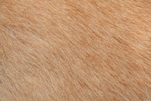 Close Up Brown Dog Skin For Background