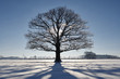canvas print picture - Eiche im Schnee