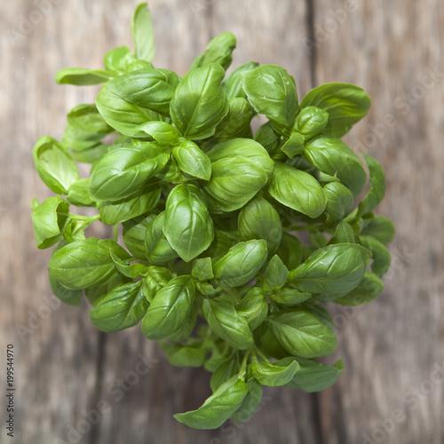 Photo potée de basilic frais