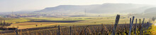 Panorama Vineyard Landscape View In Germany