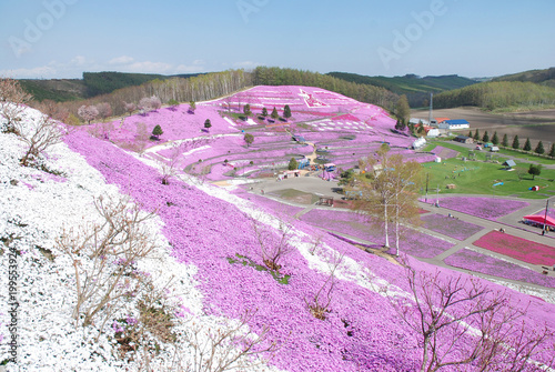 Foto op Canvas Purper spring park with ground pink flowers / 満開の芝桜公園(広角)