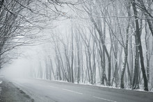 Bare Trees In Winter Stand Along The Road With Fog Mystical Background