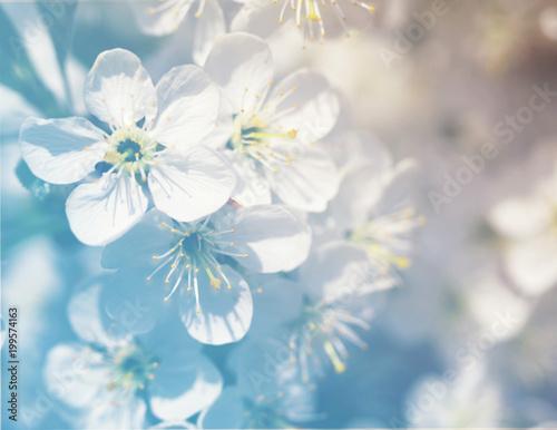 Spring blossoming garden, soft focus, toned. Flower spring background.