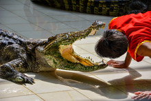 """Show Of Crocodiles"" Performer Puts His Head In Crocodile Mouth During A Show In A Zoo, Thailand"