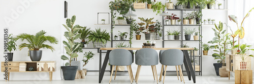Obraz Bright interior with plants - fototapety do salonu