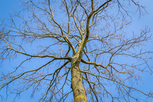 The Complex Structure Of Tre Branches In Front Of A Bluw Sky As A Metaphor Form A Complex Social Network