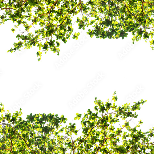 Cadres-photo bureau Arbre Green leaf border isolated on a white background