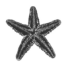 Vector Engraved Style Illustration For Posters, Decoration And Print. Hand Drawn Sketch Of Starfish In Monochrome Isolated On White Background. Detailed Vintage Woodcut Style Drawing.