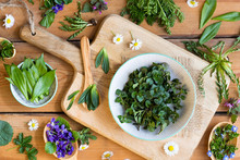 Wild Edible Spring Plants On A...