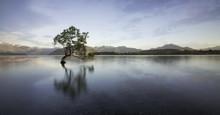 Wanaka Tree New Zealand Iconic Shot Photography
