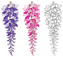 Vector Set Of Outline Wisteria...