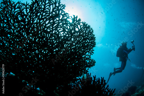 Delicate Coral and Scuba Diver in Blue Water