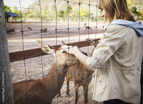 The girl stroking the deer in the Zoo.