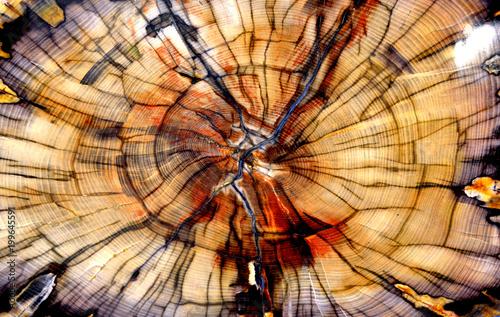 Foto auf Leinwand Texturen Petrified Elm