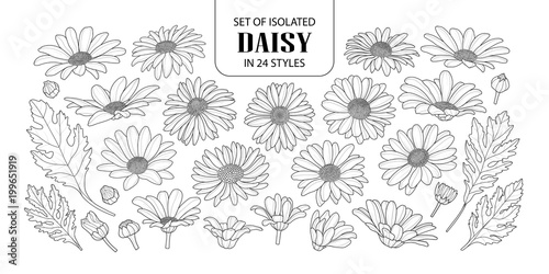 Set of isolated daisy in 24 styles. Wallpaper Mural