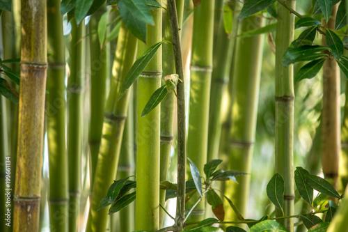 In de dag Bamboo Aveiro, Portugal