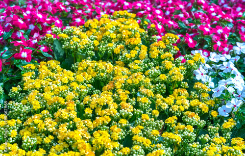 Tuinposter Bloemen Flowerbeds in the park decorated many kinds of flowers in bursts of colorful colors in the early spring sunshine beautiful.
