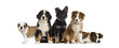 Group of puppies sitting in front of a white background