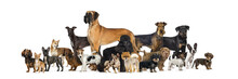 Large Group Of Purebred Dogs I...