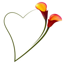 Realistic Red Calla Lily Romantic Frame. The Symbol Of Attraction And Passion.