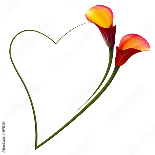 Realistic Red Calla Lily Romantic Frame The Symbol Of Attraction