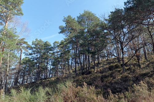 Foto op Aluminium Grijze traf. la Malmontagne hill in fontainebleau forest