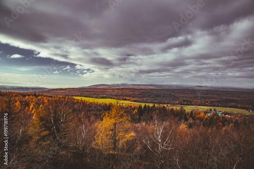 Foto op Plexiglas Diepbruine Autumn