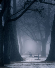 Winter Image Of A Park With Oaks And Park Benches In Fog