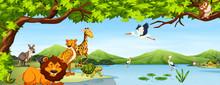 Various Wild Animals Scene