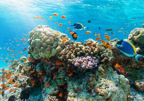 Poster Coral reefs Farbenfrohes Korallenriff mit tropischen Fischen im Indischen Ozean, Malediven