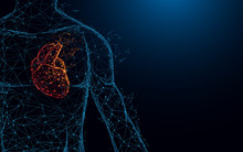 Human Heart Anatomy Form Lines...