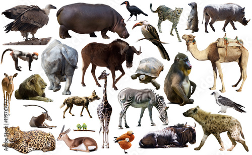 Fotobehang Leeuw Birds, mammal and other animals of Africa isolated
