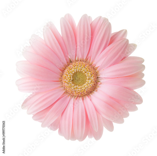 Foto auf Gartenposter Gerbera Light pink Gerbera flower isolated on white background.