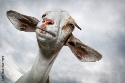 Goat with big ears in the sky background Wallpaper Mural
