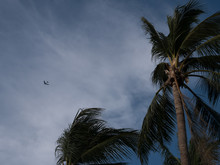 USAF B-52 Over Palm Trees