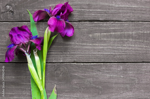 purple iris flowers mockup on dark rustic wood background for creative work design. top view