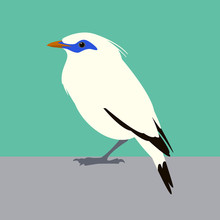 Bali Mynah  Bird  Vector Illustration Flat Style  Profile