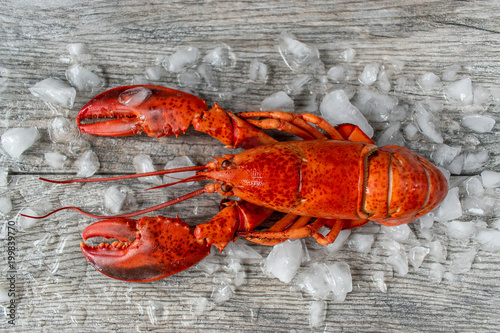 Cuadros en Lienzo raw red lobster on ice and gray wooded surface flat lay