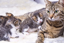 Baby Cat And Mother Cat