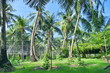 Palm tree plantation, tropical island