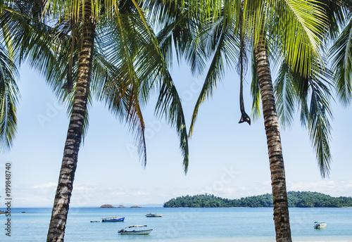 Foto op Plexiglas Palm boom Coiba Island Panama