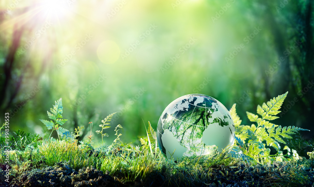 Fototapety, obrazy: Globe On Moss In Forest - Environmental Concept
