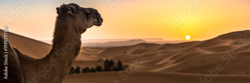 Keuken foto achterwand Kameel Abstract nature background. Morocco.