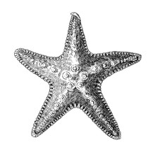 Hand Drawn Sea Starfish Isolated