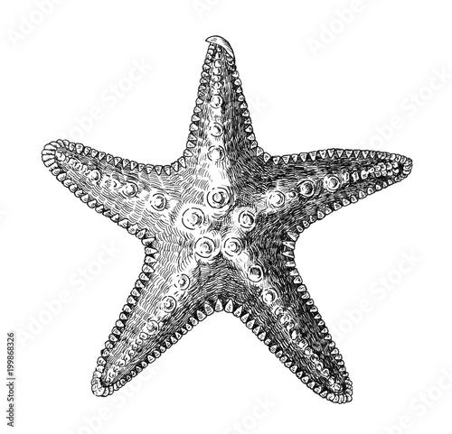 Fototapeta  Hand drawn sea starfish isolated