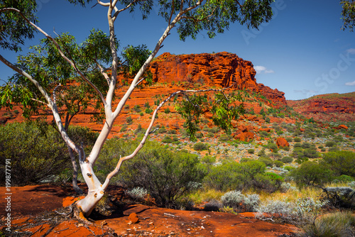 Aussie Outback Canvas Print