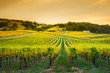 canvas print picture - Adelaide Hills Vineyard