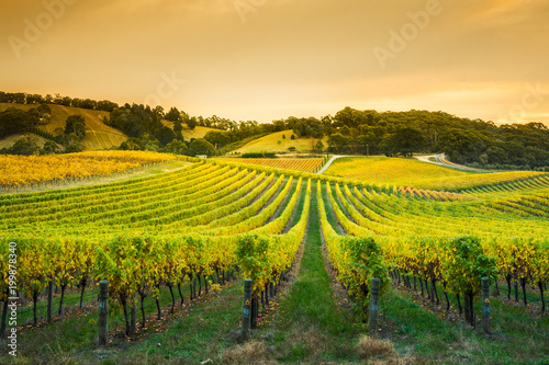 Wall Murals Vineyard Adelaide Hills Vineyard