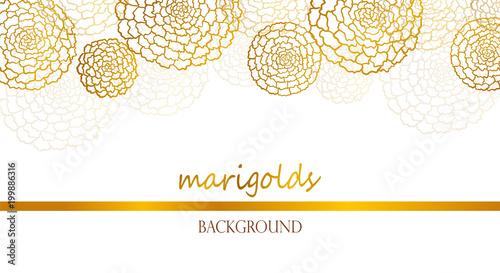 Fototapeta Vector white banner with golden marigolds